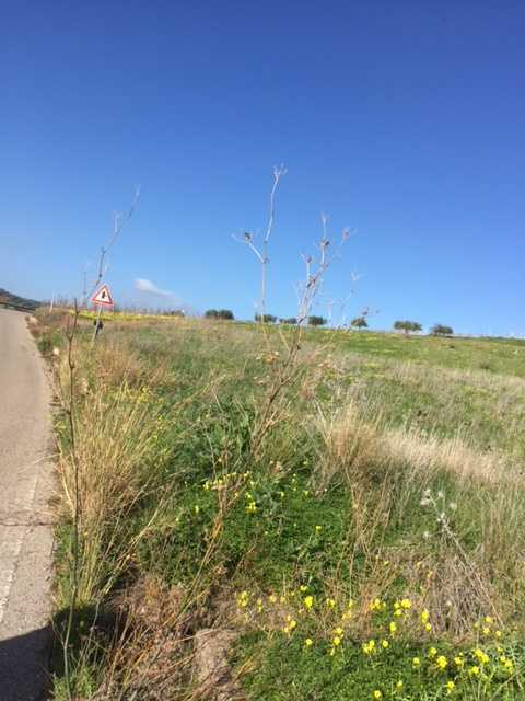 For sale Land Casteldaccia Cast.Traversa-Vallecorvo #CA289 n.2