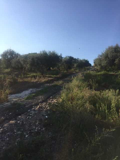For sale Rural/farmhouse Casteldaccia Cast. Fiorilli - Ferrante #CA338 n.3