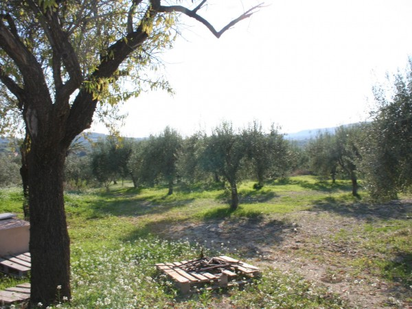 For sale Land Noto  #62T n.4