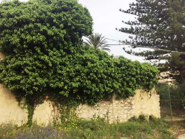 For sale Rural/farmhouse Casteldaccia Cast.Traversa-Vallecorvo #CA196 n.3