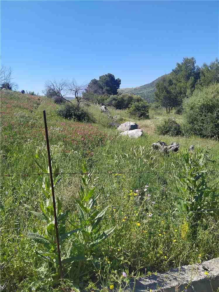 For sale Land Casteldaccia Cast.Traversa-Vallecorvo #CA282 n.2