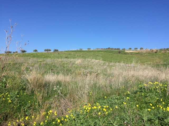 Land Casteldaccia #CA289
