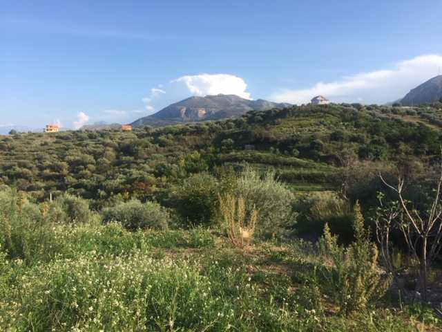 For sale Land Casteldaccia Cast. Fiorilli - Ferrante #CA338 n.2
