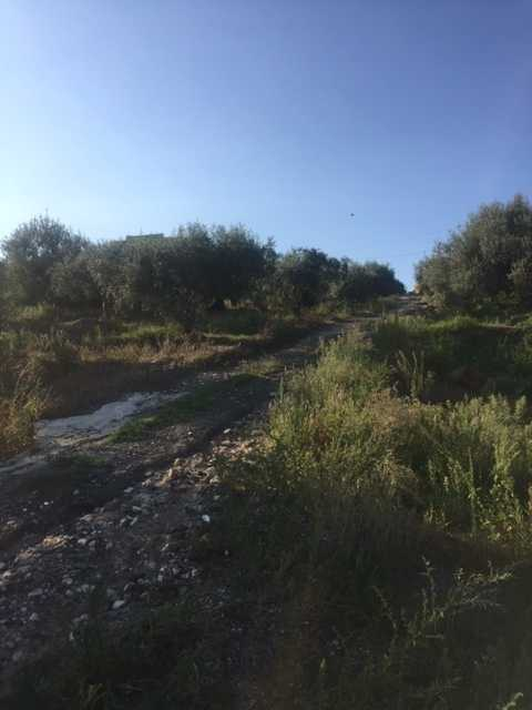 For sale Land Casteldaccia Cast. Fiorilli - Ferrante #CA338 n.3