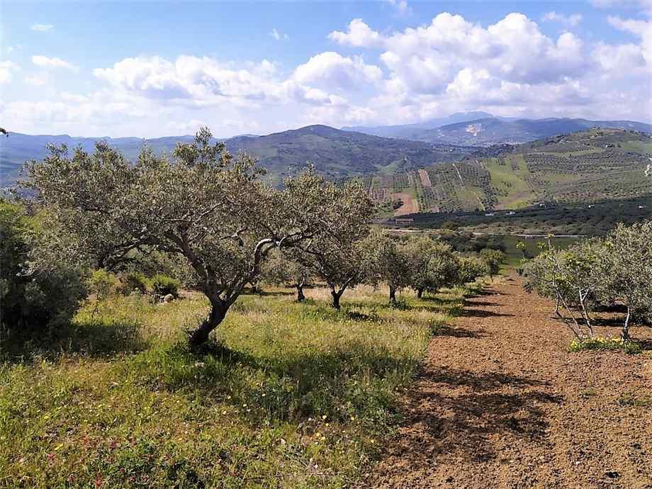 Land Casteldaccia #CA422