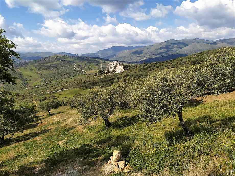 For sale Land Casteldaccia Cast.Traversa-Vallecorvo #CA422 n.3