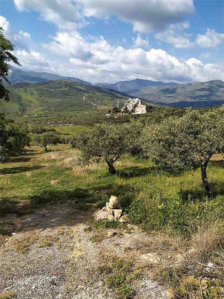 For sale Land Casteldaccia Cast.Traversa-Vallecorvo #CA422 n.4