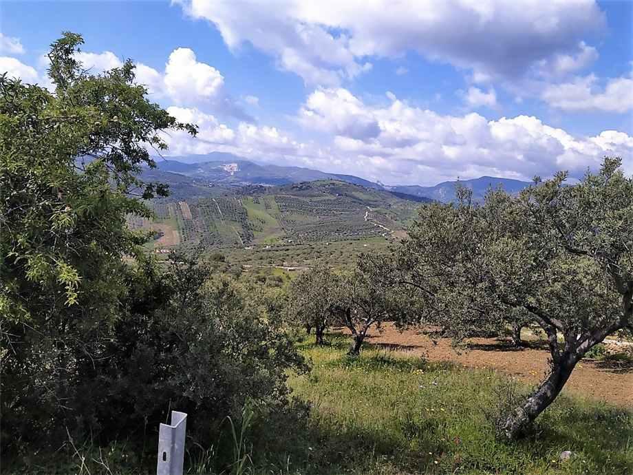 For sale Land Casteldaccia Cast.Traversa-Vallecorvo #CA422 n.5