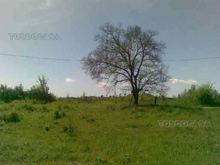 Land Fucecchio #TE39