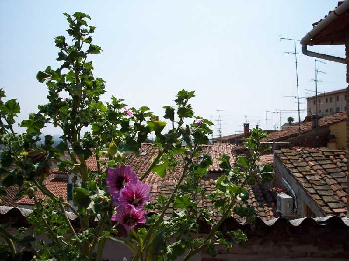 For sale Penthouse Fucecchio  #1100 n.2
