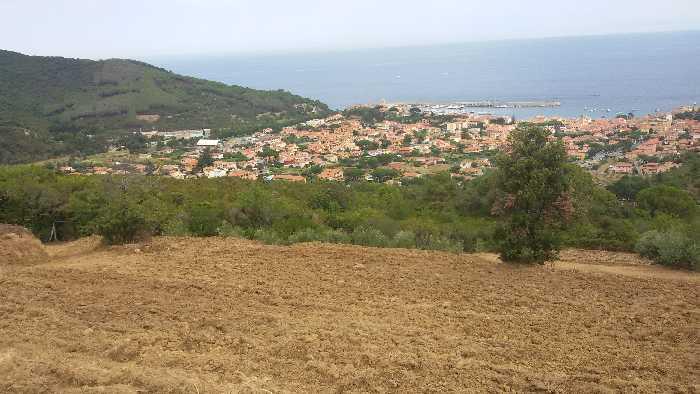 Vendita Azienda Agricola Marciana Marina Marciana Mar. altre zone #4192 n.2