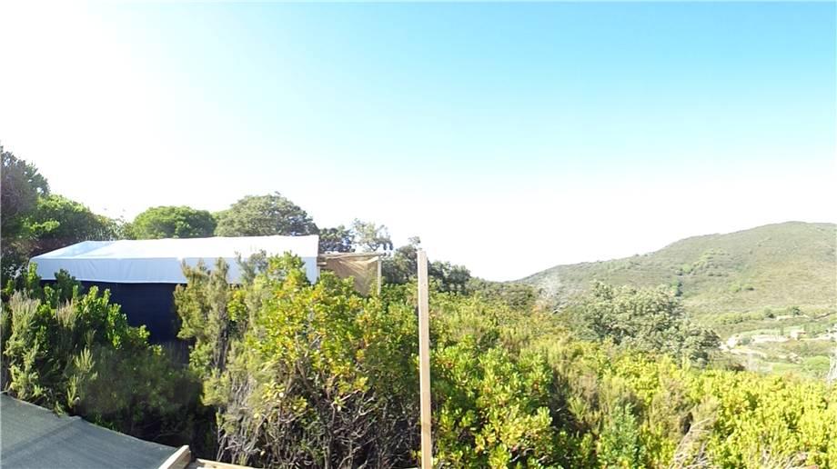 Vendita Azienda Agricola Campo nell'Elba Campo Elba altre zone #4424 n.2