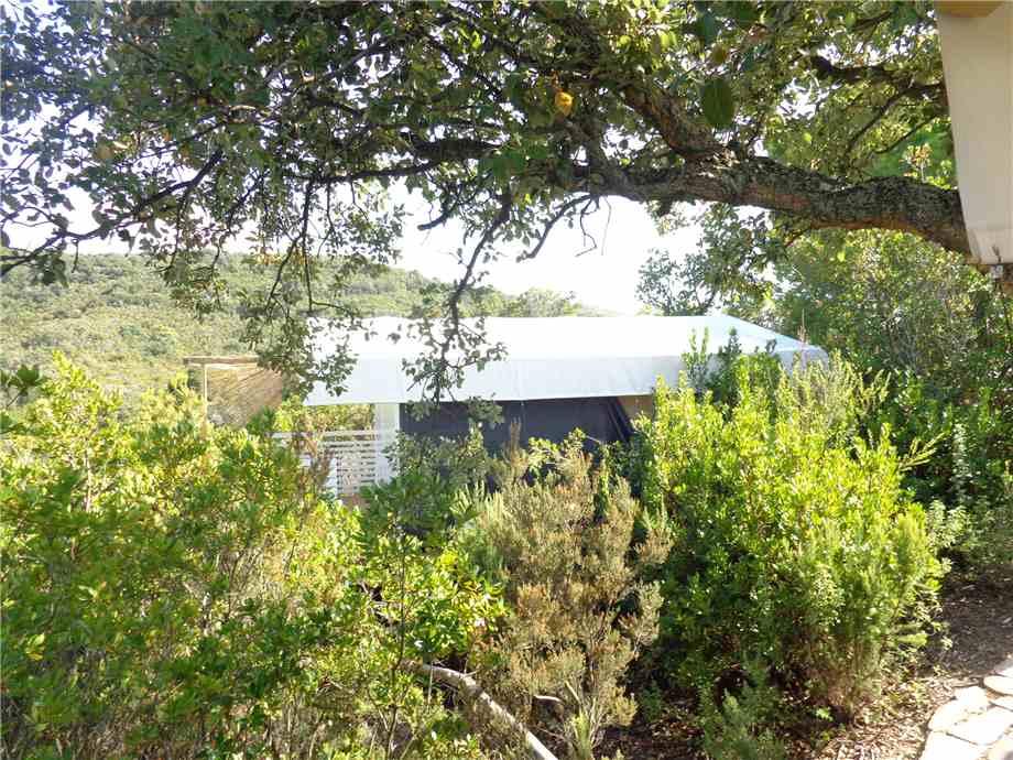 Vendita Azienda Agricola Campo nell'Elba Campo Elba altre zone #4424 n.5