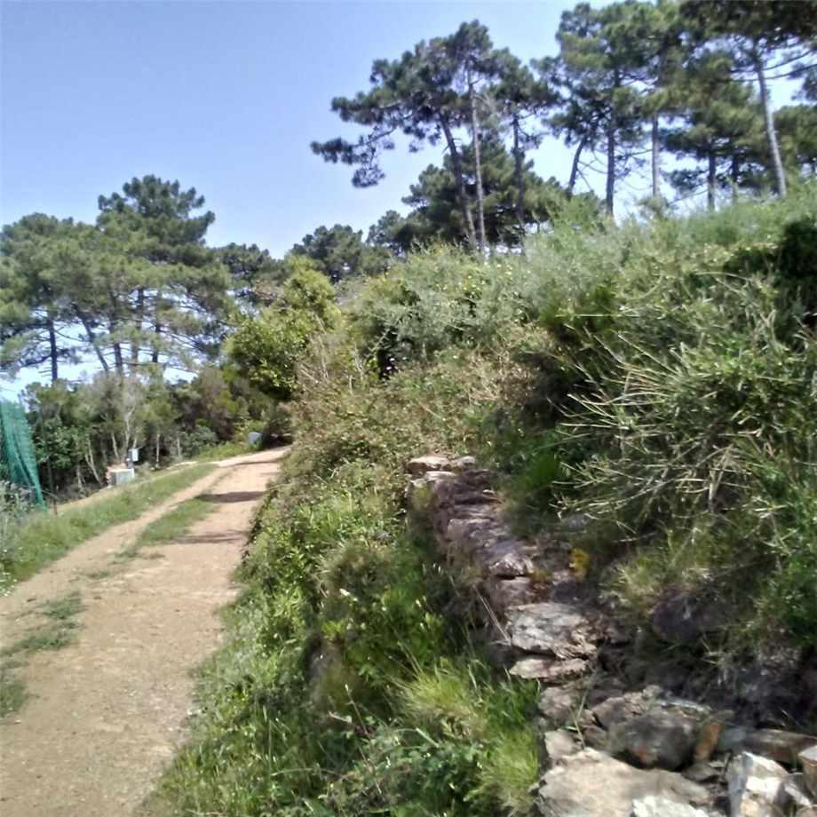 For sale Land Capoliveri Capoliveri altre zone #4637 n.5