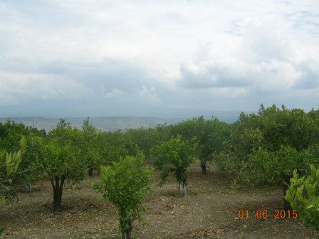 For sale Land Centuripe  #1674/a n.4
