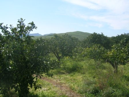 For sale Land Catenanuova  #1792 n.3