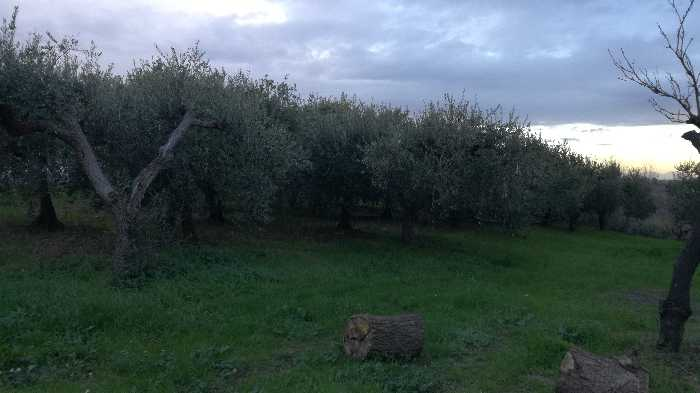 For sale Land Lanciano  #CT 24 n.3