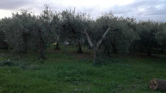 For sale Land Lanciano  #CT 24 n.4