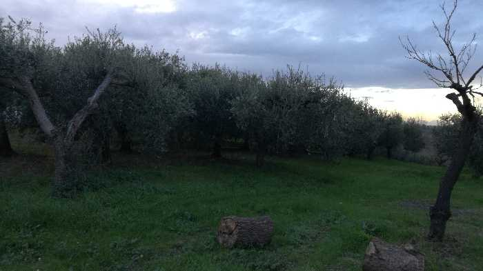 For sale Land Lanciano  #CT 24 n.5