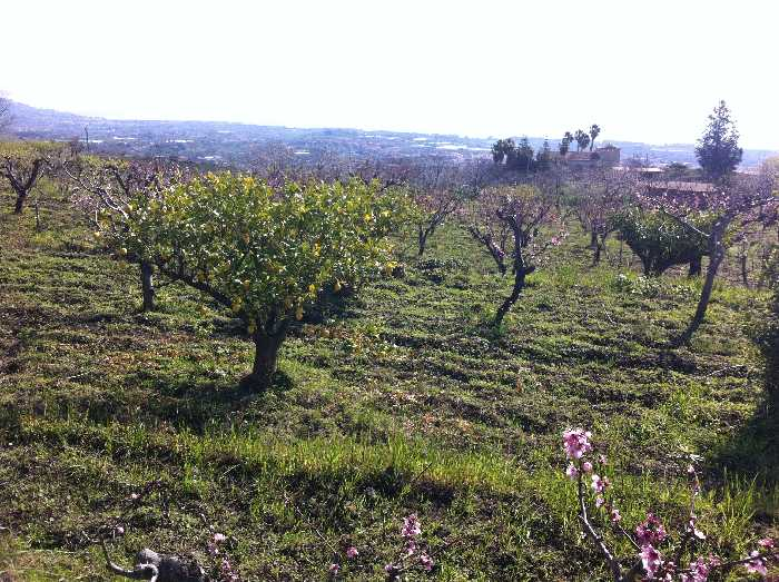 For sale Land Fiumefreddo di Sicilia  #57 n.1