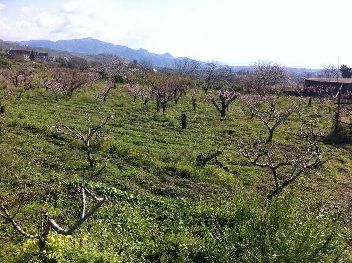 Vendita Terreno Fiumefreddo di Sicilia  #57 n.3