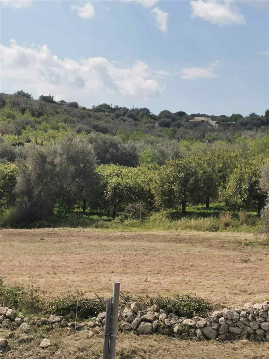 For sale Land Noto  #107T n.13