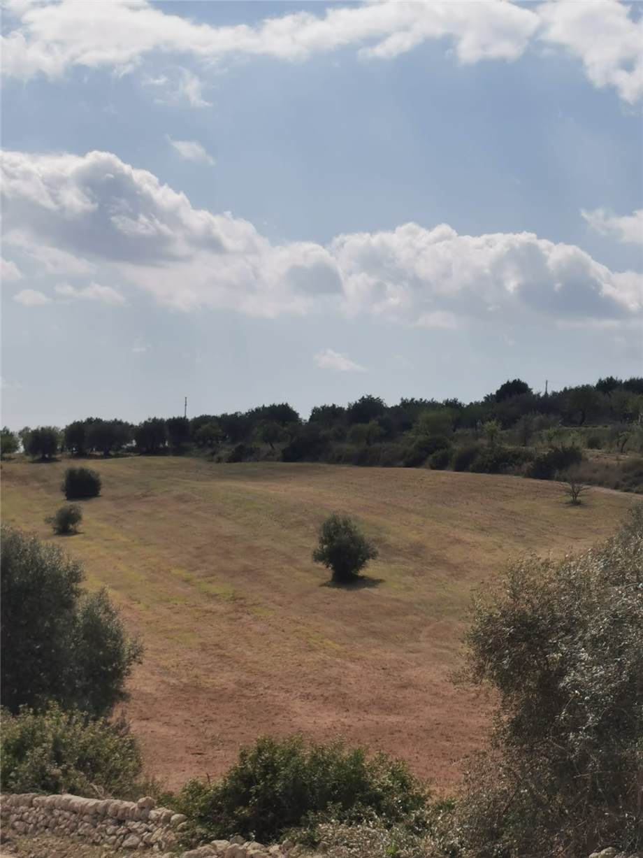 For sale Land Noto  #107T n.14