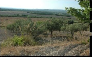 For sale Land Noto  #110T n.4
