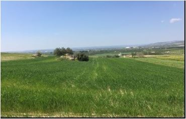 For sale Land Noto  #110T n.6