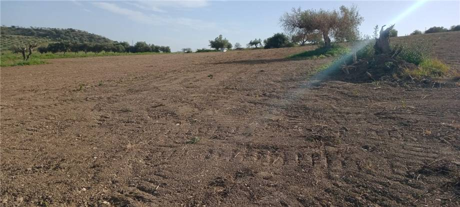 For sale Land Noto  #110T n.8