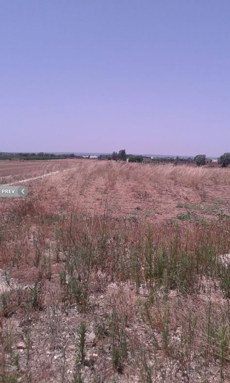 For sale Rural/farmhouse Modica  #1TM n.3