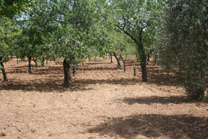For sale Rural/farmhouse Noto  #32T n.2