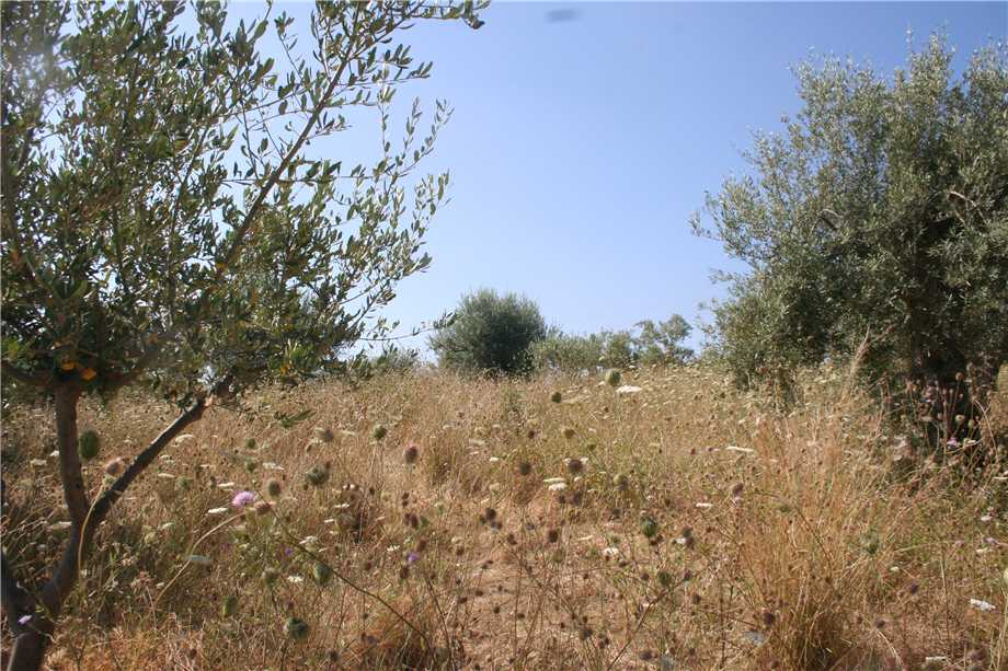 For sale Land Noto  #12T n.2