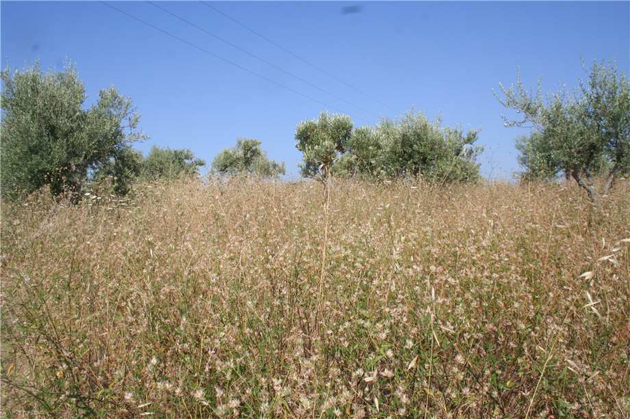For sale Land Noto  #12T n.4