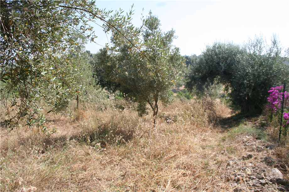 For sale Land Noto  #12T n.5