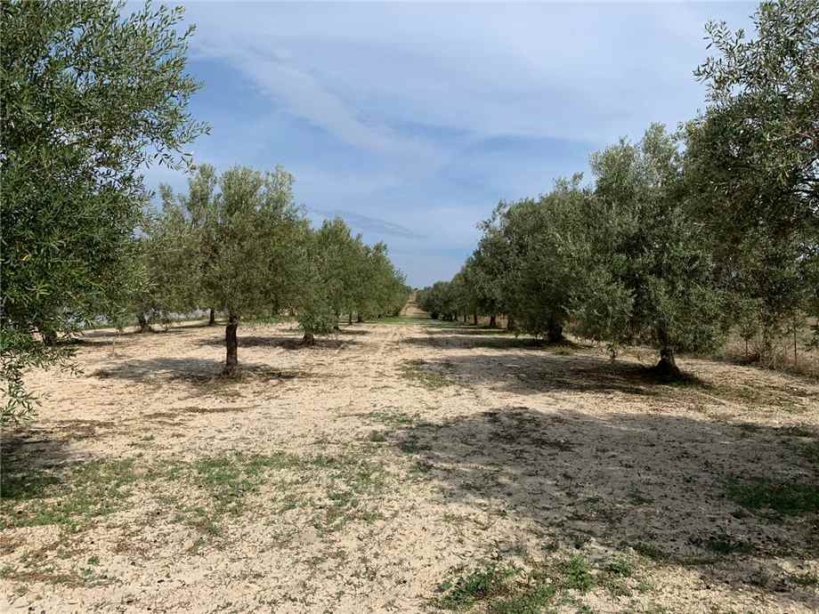 For sale Land Noto  #16T n.2