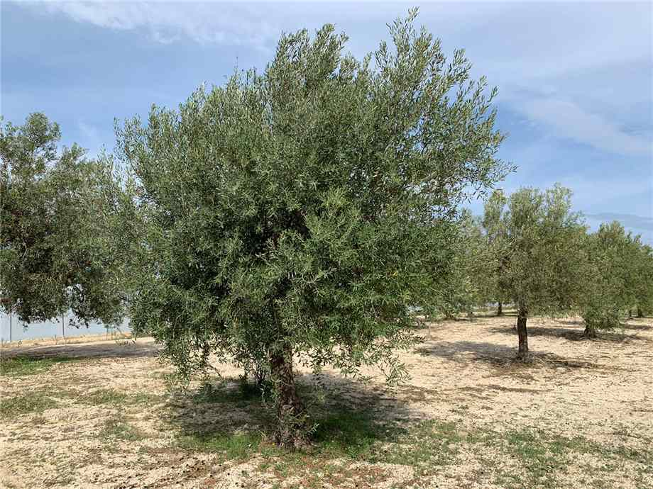 For sale Land Noto  #16T n.4