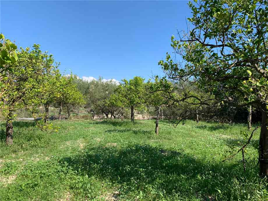 For sale Land Noto  #18T n.4