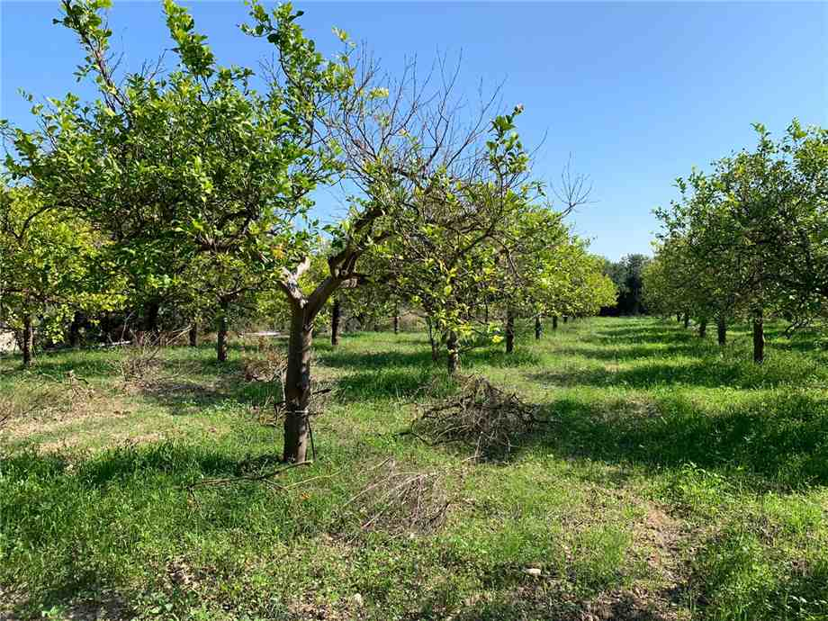 For sale Land Noto  #18T n.6