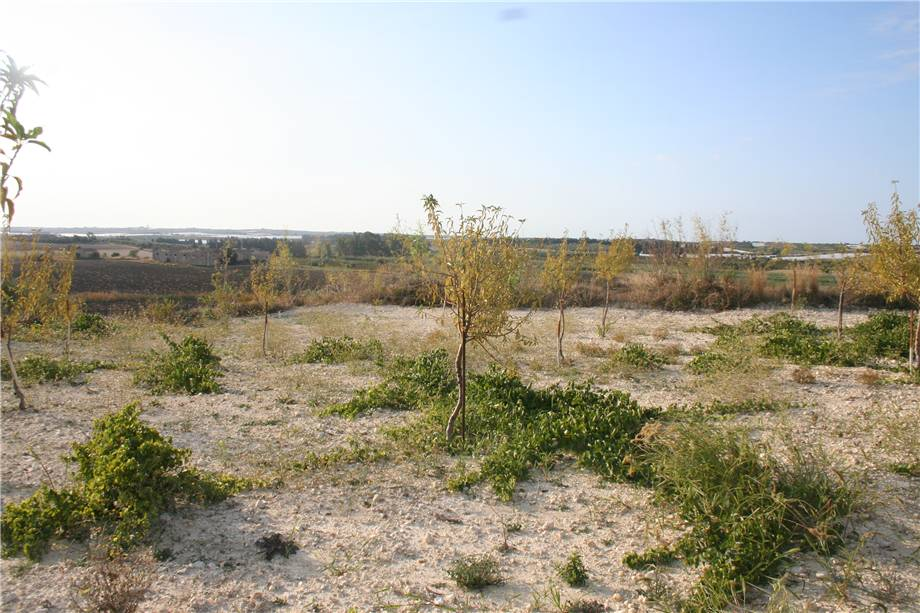 For sale Land Noto  #3tn n.14