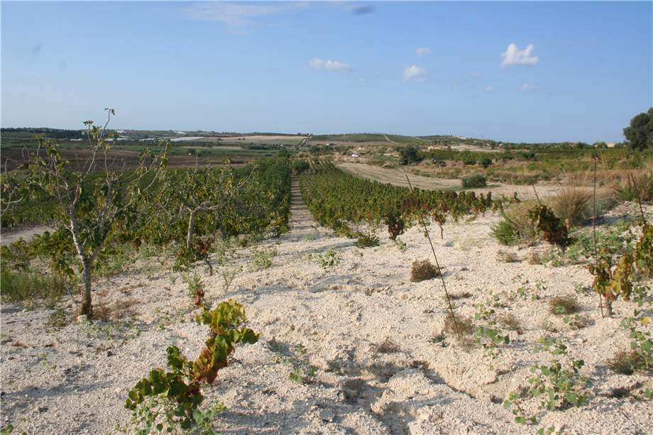For sale Land Noto  #3tn n.8