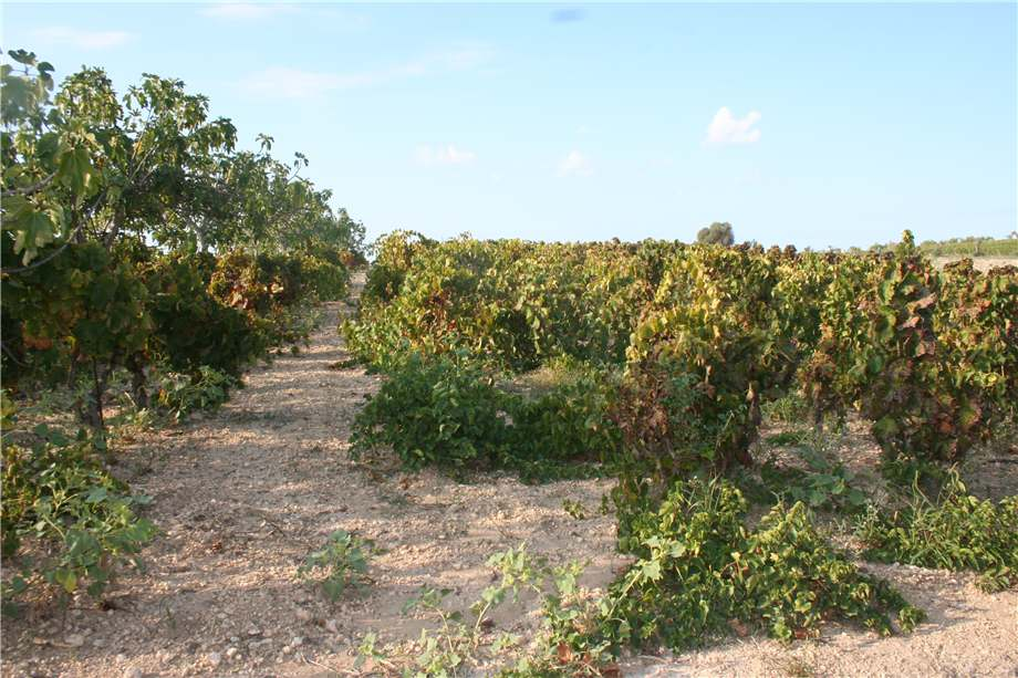 For sale Land Noto  #3tn n.9
