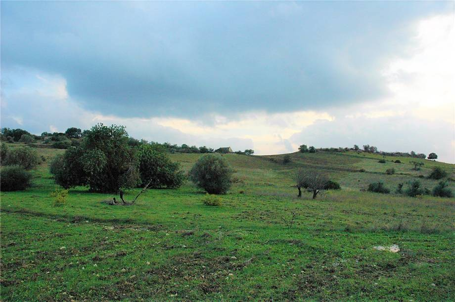 For sale Land Noto  #294T n.2