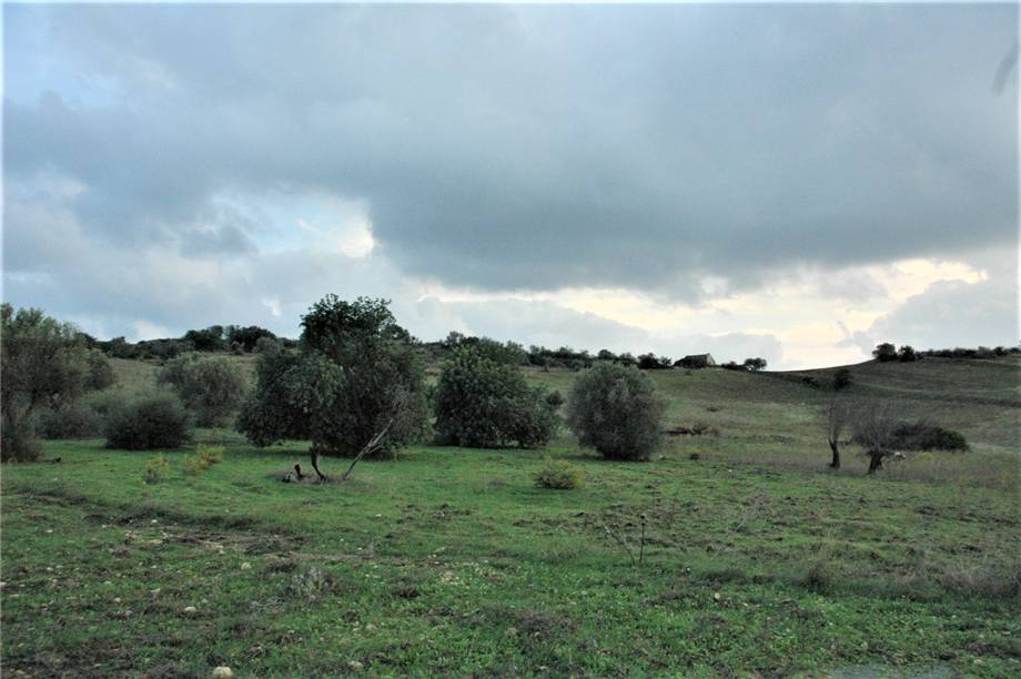 For sale Land Noto  #294T n.4