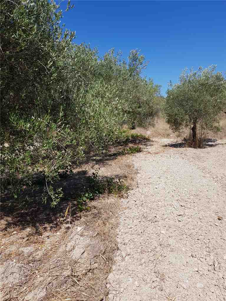 For sale Land Noto  #67T n.2