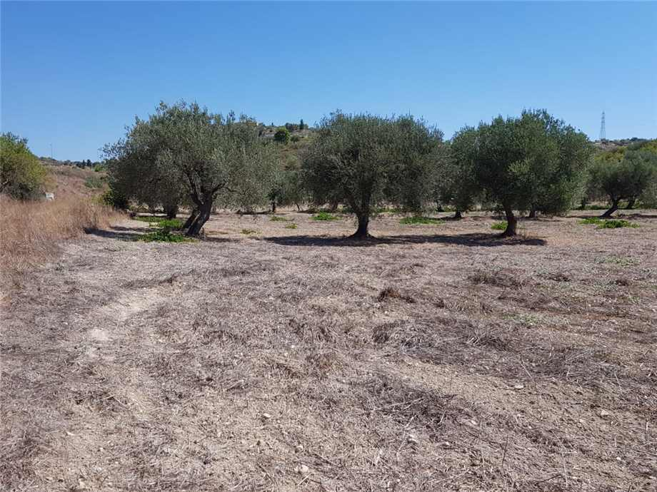 For sale Land Noto  #67T n.4