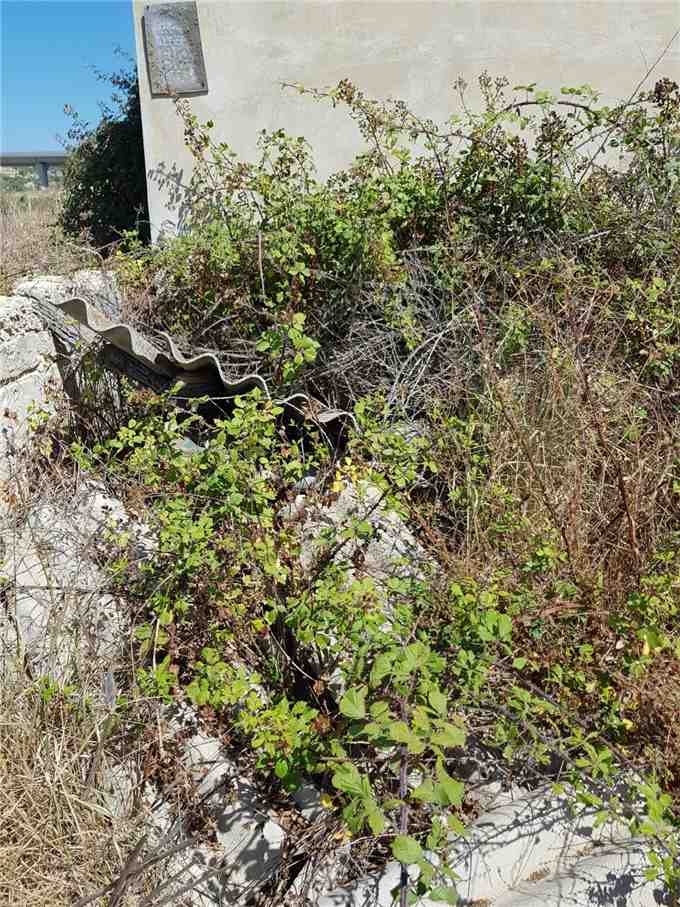 For sale Land Noto  #67T n.5