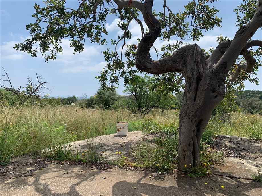 For sale Land Noto  #35T n.11