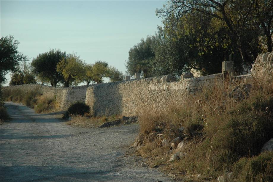 For sale Land Noto  #230T n.10