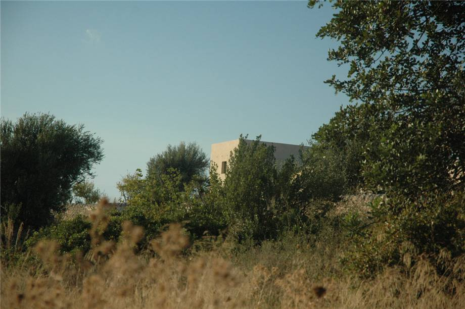 For sale Land Noto  #230T n.6